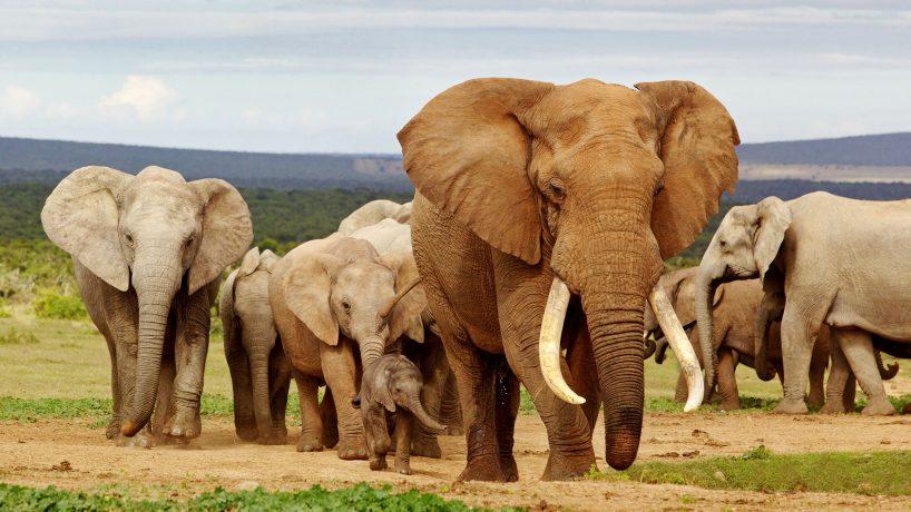 Les 25 plus grands animaux du monde photos et vidéos