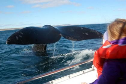 Les meilleurs endroits au monde pour lobservation des baleines
