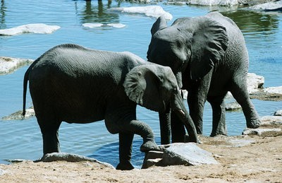 Zoo de Guadalajara